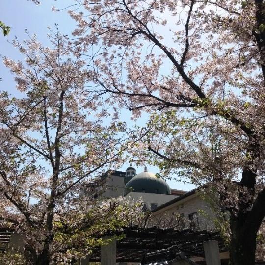 モスクと神社と桜