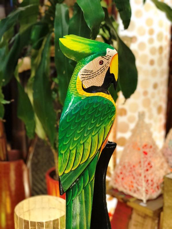 南国鳥/オウム