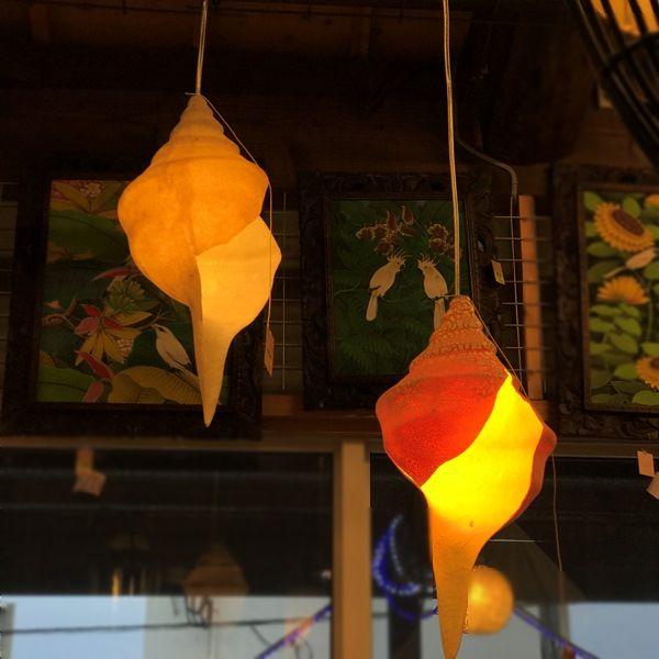 シェルランプ/貝のライト