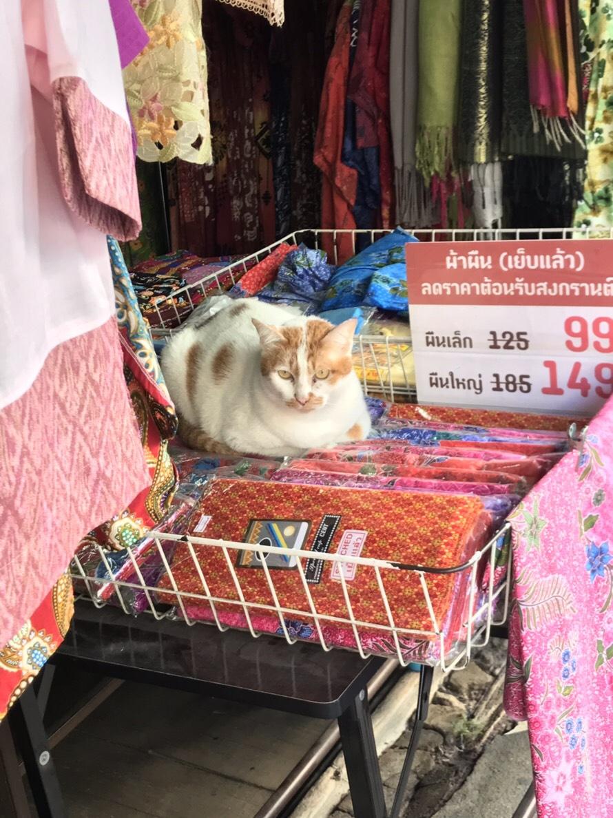 チェンマイ 猫
