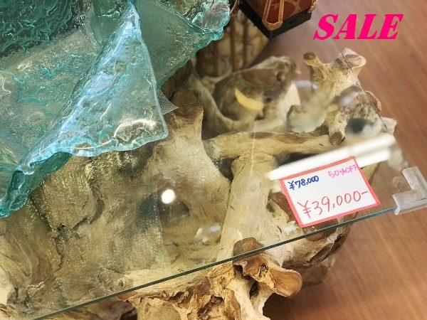 サマーセール,木の化石