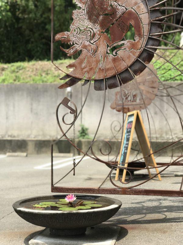 蓮の花,ロータス