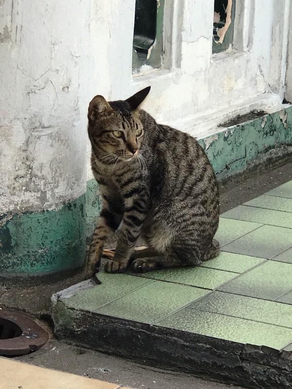 バンコク 猫